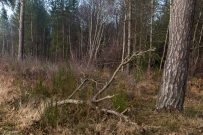 kings-wood-winter-30